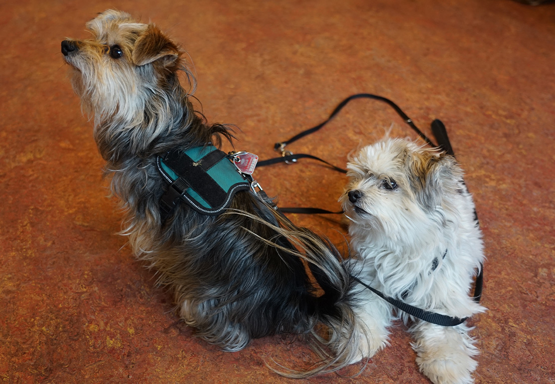 Unsere Therapie-Hunde